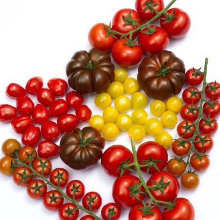Verschillende tomatenrassen bij elkaar