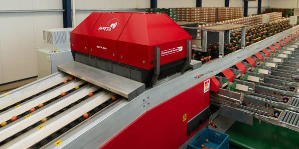 3D scanner voor kwaliteitscontrole en sorteren van tomaten