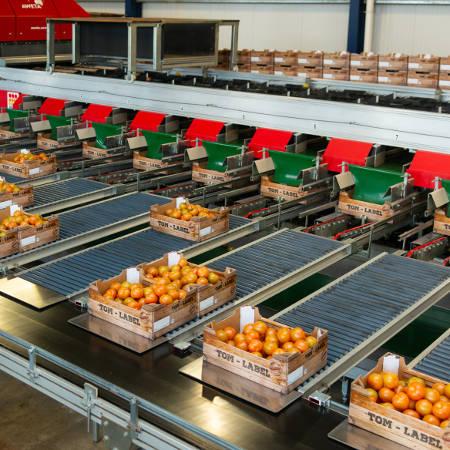 Sorteer- en inpakmachine voor tomaten bij Breugem Horticulture