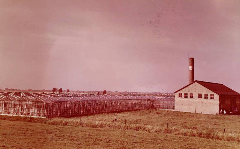 geschiedenis foto van de kas van Tomatenkwekerij Breugem